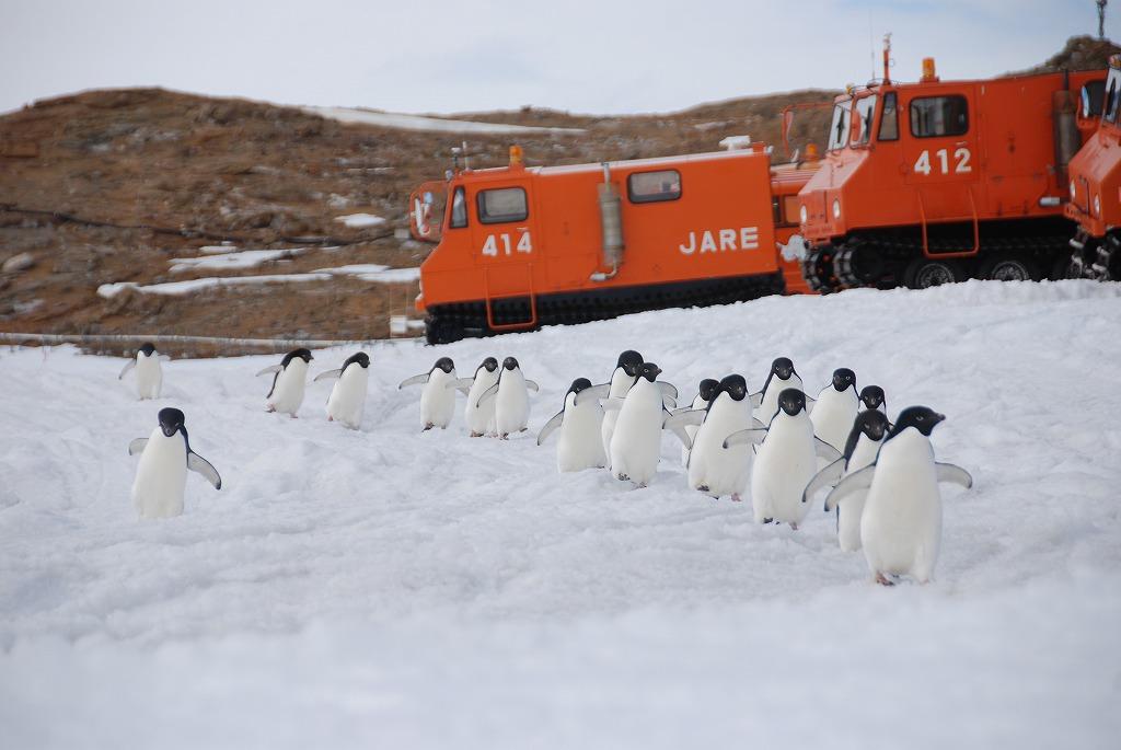 南極 ごかい越冬男